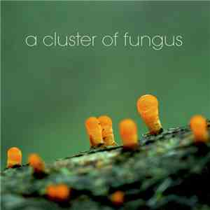 A Cluster Of Fungus - Out Of The Dregs Of Wine, A Fungus Emerged, A Cluster album flac